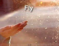 fly celine dion