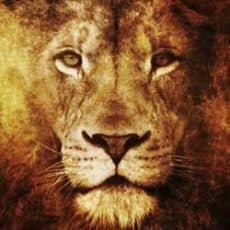 Sun in Leo- Focus Upon Your Strengths
