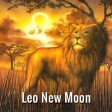 Leo New Moon August 1st Time to Shine