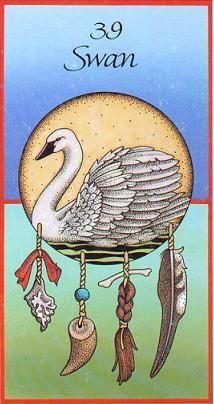 swan medicine card
